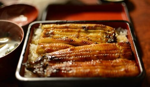 a tray of eel meat