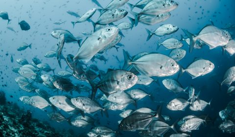 a crowd of fishes