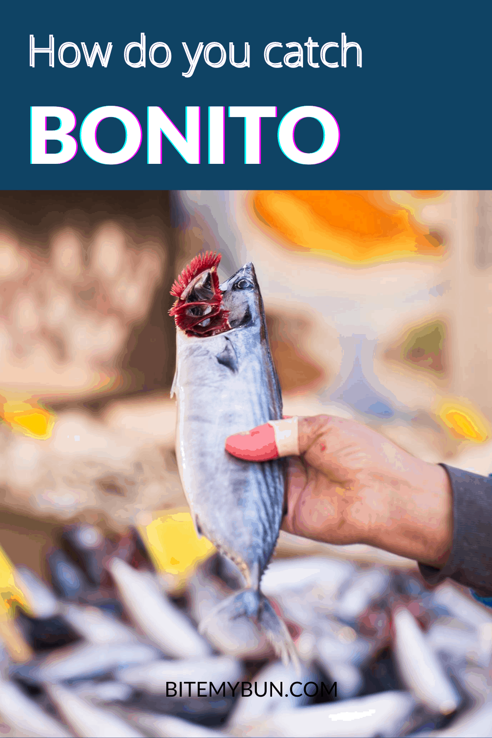 How to catch bonito
