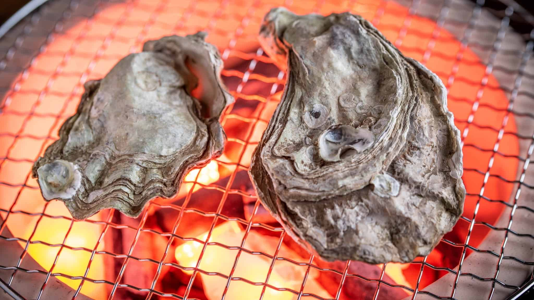 Grilling oysters on a round shichirin grill